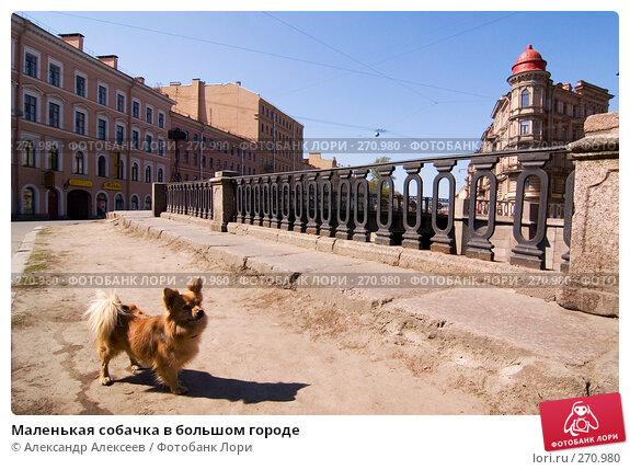Маленькая собачка в большом городе, эксклюзивное фото № 270980, снято 3 мая 2008 г. (c) Александр Алексеев / Фотобанк Лори