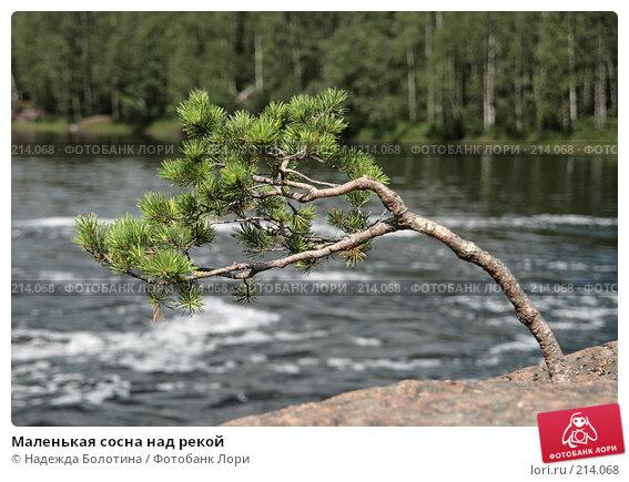 Купить «Маленькая сосна над рекой», фото № 214068, снято 11 июля 2007 г. (c) Надежда Болотина / Фотобанк Лори