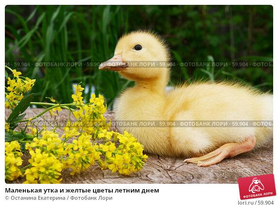 Маленькая утка и желтые цветы летним днем, фото № 59904, снято 26 мая 2007 г. (c) Останина Екатерина / Фотобанк Лори