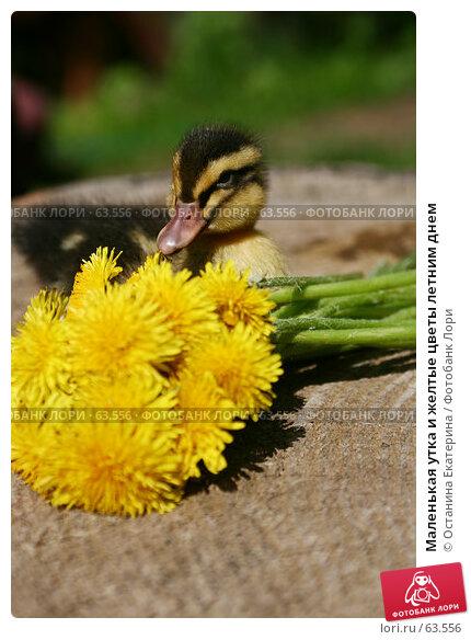 Маленькая утка и желтые цветы летним днем, фото № 63556, снято 26 мая 2007 г. (c) Останина Екатерина / Фотобанк Лори
