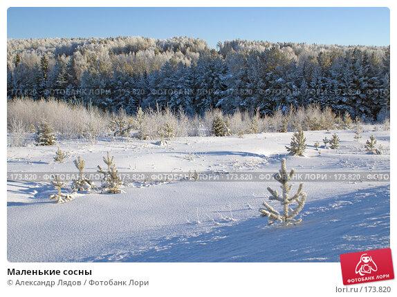 Маленькие сосны, фото № 173820, снято 8 января 2008 г. (c) Александр Лядов / Фотобанк Лори