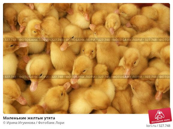 Маленькие желтые утята, фото № 327748, снято 27 мая 2008 г. (c) Ирина Игумнова / Фотобанк Лори