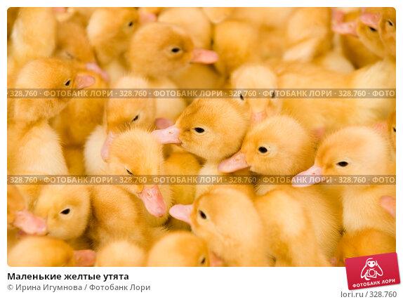 Купить «Маленькие желтые утята», фото № 328760, снято 27 мая 2008 г. (c) Ирина Игумнова / Фотобанк Лори