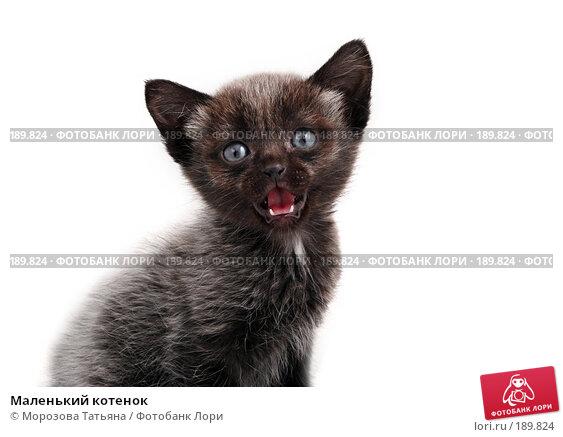 Маленький котенок, фото № 189824, снято 30 января 2008 г. (c) Морозова Татьяна / Фотобанк Лори