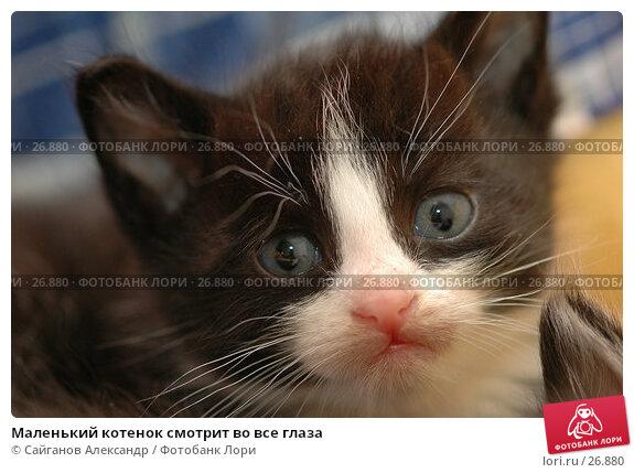 Купить «Маленький котенок смотрит во все глаза», фото № 26880, снято 17 января 2005 г. (c) Сайганов Александр / Фотобанк Лори