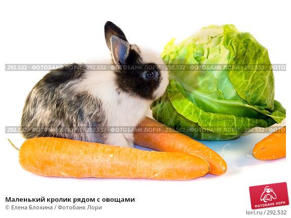 Маленький кролик рядом с овощами, фото № 292532, снято 20 мая 2008 г. (c) Елена Блохина / Фотобанк Лори