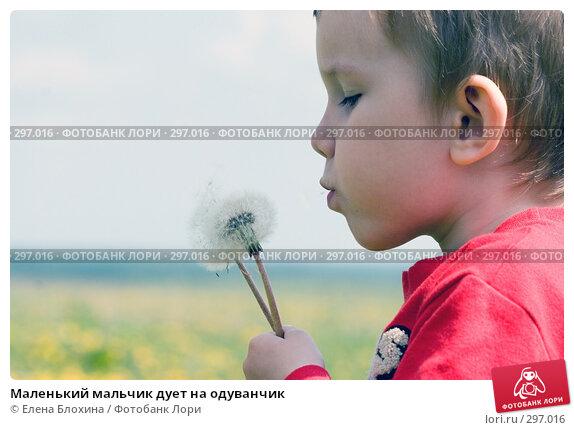 Маленький мальчик дует на одуванчик, фото № 297016, снято 18 мая 2008 г. (c) Елена Блохина / Фотобанк Лори