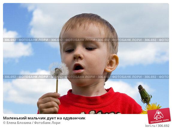 Маленький мальчик дует на одуванчик, фото № 306692, снято 27 мая 2008 г. (c) Елена Блохина / Фотобанк Лори