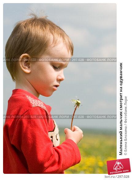 Маленький мальчик смотрит на одуванчик, фото № 297028, снято 18 мая 2008 г. (c) Елена Блохина / Фотобанк Лори