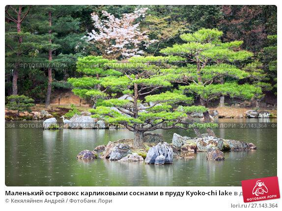 Купить «Маленький островокс карликовыми соснами в пруду Kyoko-chi lake в дождливую погоду. Золотой павильон (Kinkaku-ji). Киото, Япония», фото № 27143364, снято 12 апреля 2013 г. (c) Кекяляйнен Андрей / Фотобанк Лори