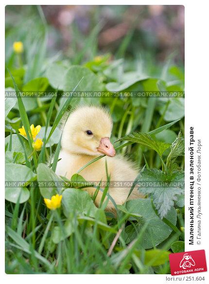 Маленький птенец в зеленой траве, фото № 251604, снято 13 апреля 2008 г. (c) Галина Лукьяненко / Фотобанк Лори