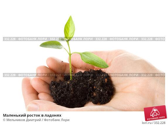 Купить «Маленький росток в ладонях», фото № 332228, снято 28 мая 2008 г. (c) Мельников Дмитрий / Фотобанк Лори