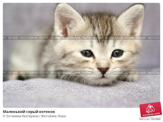 Маленький серый котенок, фото № 59660, снято 4 июля 2007 г. (c) Останина Екатерина / Фотобанк Лори