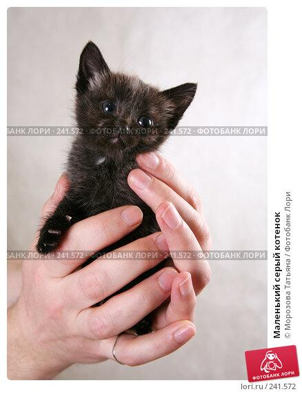 Маленький серый котенок, фото № 241572, снято 28 января 2008 г. (c) Морозова Татьяна / Фотобанк Лори