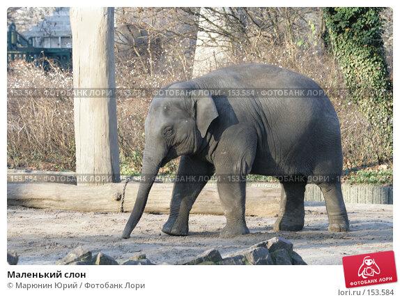 Маленький слон, фото № 153584, снято 10 декабря 2007 г. (c) Марюнин Юрий / Фотобанк Лори