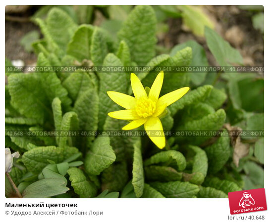 Маленький цветочек, фото № 40648, снято 18 апреля 2007 г. (c) Удодов Алексей / Фотобанк Лори