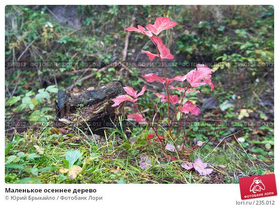 Маленькое осеннее дерево, фото № 235012, снято 29 сентября 2007 г. (c) Юрий Брыкайло / Фотобанк Лори