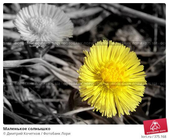 Маленькое солнышко. Стоковое фото, фотограф Дмитрий Кочетков / Фотобанк Лори