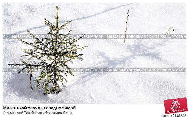 Маленькой елочке холодно зимой, фото № 196828, снято 3 февраля 2008 г. (c) Анатолий Теребенин / Фотобанк Лори