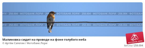 Малиновка сидит на проводе на фоне голубого неба, фото № 258004, снято 7 мая 2006 г. (c) Артём Сапегин / Фотобанк Лори