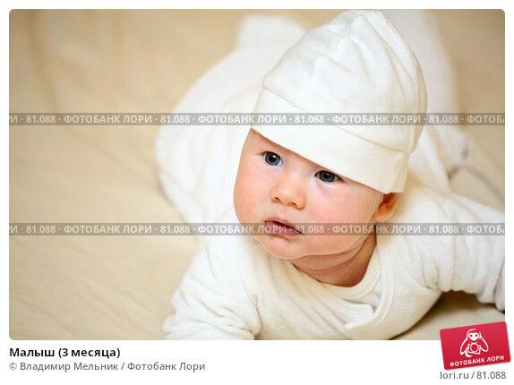 Малыш (3 месяца), фото № 81088, снято 27 августа 2007 г. (c) Владимир Мельник / Фотобанк Лори