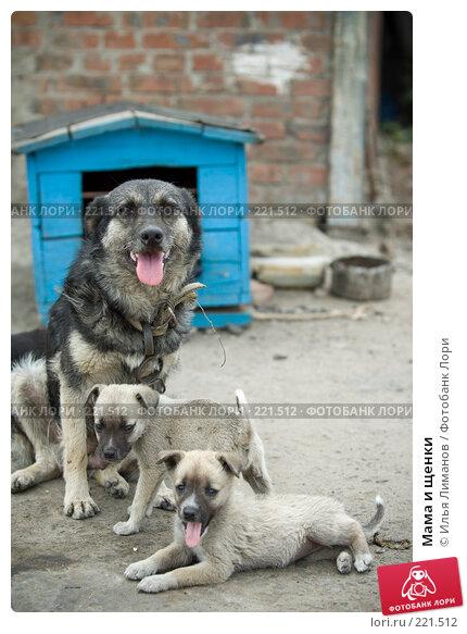 Мама и щенки, фото № 221512, снято 8 августа 2007 г. (c) Илья Лиманов / Фотобанк Лори