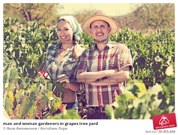 man and woman gardeners in grapes tree yard. Стоковое фото, фотограф Яков Филимонов / Фотобанк Лори