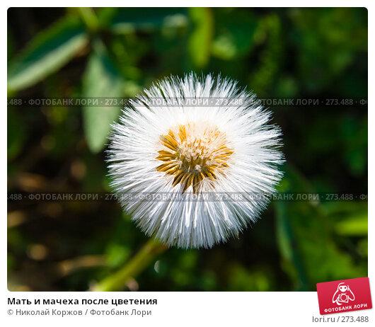 Мать и мачеха после цветения, фото № 273488, снято 3 апреля 2008 г. (c) Николай Коржов / Фотобанк Лори