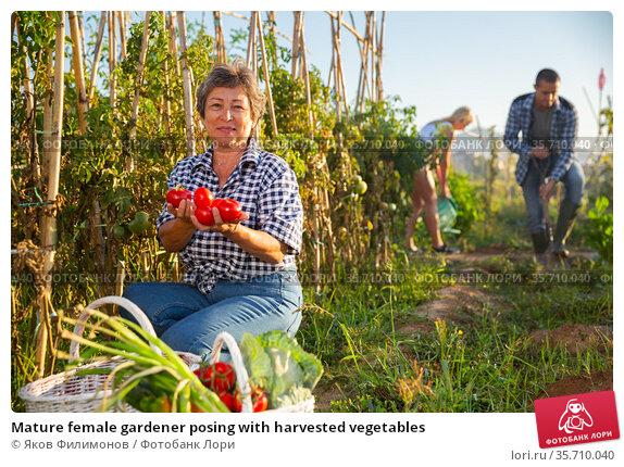 Mature female gardener posing with harvested vegetables. Стоковое фото, фотограф Яков Филимонов / Фотобанк Лори