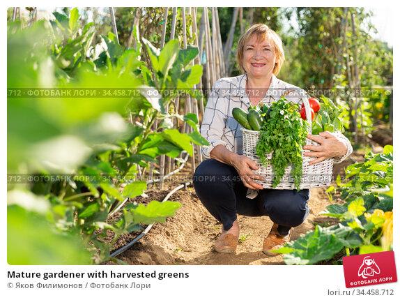 Mature gardener with harvested greens. Стоковое фото, фотограф Яков Филимонов / Фотобанк Лори