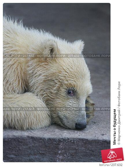 Купить «Мечты о будущем», фото № 237632, снято 22 марта 2008 г. (c) Марченко Дмитрий / Фотобанк Лори