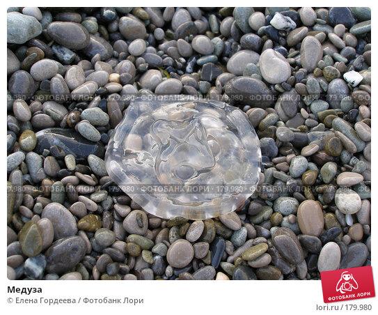 Медуза, фото № 179980, снято 27 июля 2006 г. (c) Елена Гордеева / Фотобанк Лори