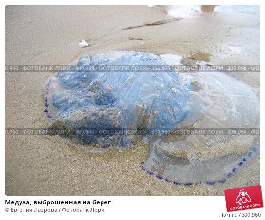 Медуза, выброшенная на берег, фото № 300960, снято 29 августа 2006 г. (c) Евгения Лаврова / Фотобанк Лори