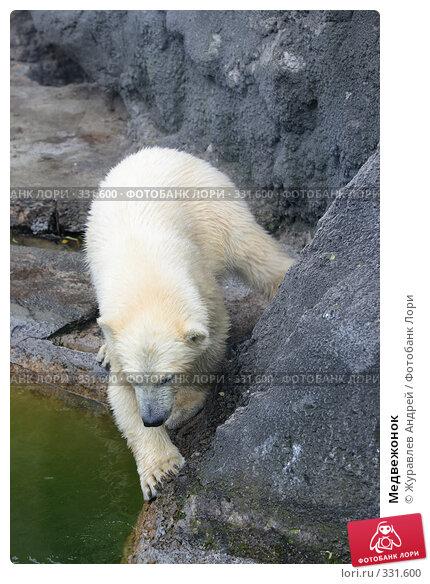Медвежонок, эксклюзивное фото № 331600, снято 18 июня 2008 г. (c) Журавлев Андрей / Фотобанк Лори