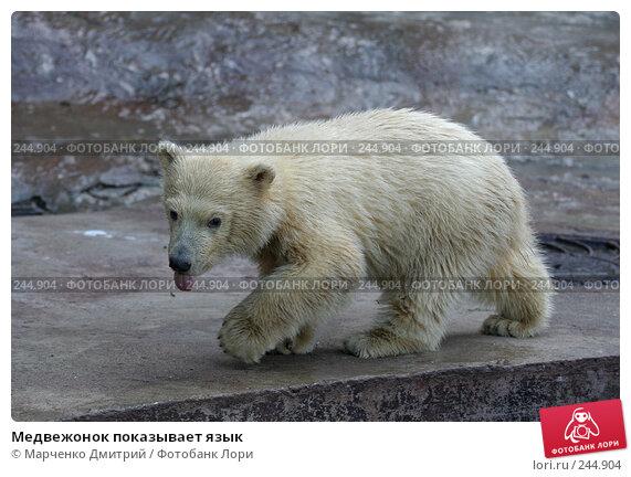 Медвежонок показывает язык, фото № 244904, снято 22 марта 2008 г. (c) Марченко Дмитрий / Фотобанк Лори