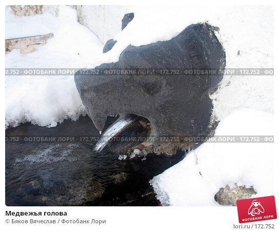 Купить «Медвежья голова», фото № 172752, снято 2 января 2008 г. (c) Бяков Вячеслав / Фотобанк Лори