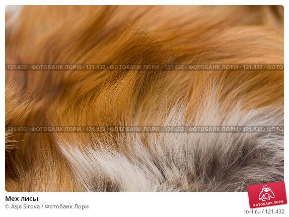 Мех лисы, фото № 121432, снято 19 ноября 2007 г. (c) Asja Sirova / Фотобанк Лори