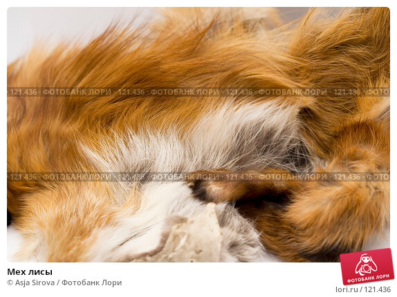 Мех лисы, фото № 121436, снято 19 ноября 2007 г. (c) Asja Sirova / Фотобанк Лори