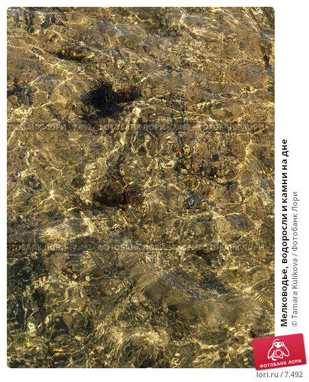 Мелководье, водоросли и камни на дне, фото № 7492, снято 8 августа 2006 г. (c) Tamara Kulikova / Фотобанк Лори