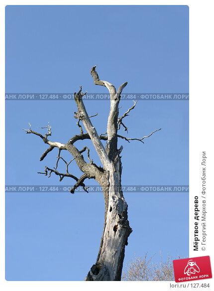 Мёртвое дерево, фото № 127484, снято 22 мая 2005 г. (c) Георгий Марков / Фотобанк Лори