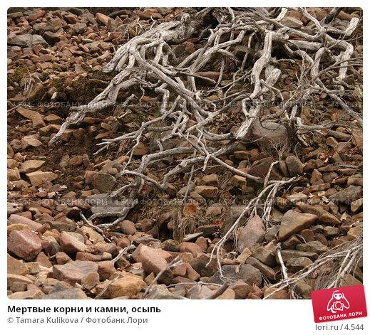 Купить «Мертвые корни и камни, осыпь», фото № 4544, снято 8 апреля 2006 г. (c) Tamara Kulikova / Фотобанк Лори