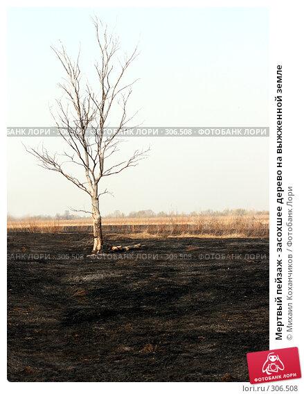 Мертвый пейзаж - засохшее дерево на выжженной земле, фото № 306508, снято 12 апреля 2008 г. (c) Михаил Коханчиков / Фотобанк Лори