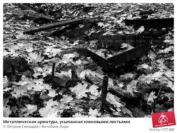 Металлическая арматура, усыпанная кленовыми листьями, фото № 177300, снято 27 октября 2007 г. (c) Петухов Геннадий / Фотобанк Лори
