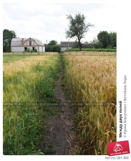 Между двух полей, фото № 261460, снято 23 июня 2007 г. (c) Ирина Борсученко / Фотобанк Лори