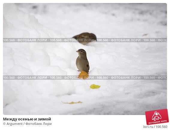 Купить «Между осенью и зимой», фото № 100560, снято 3 ноября 2006 г. (c) Argument / Фотобанк Лори