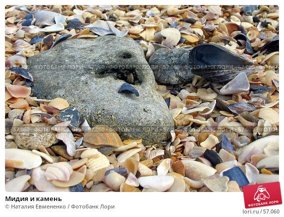 Мидия и камень, фото № 57060, снято 19 сентября 2006 г. (c) Наталия Евмененко / Фотобанк Лори