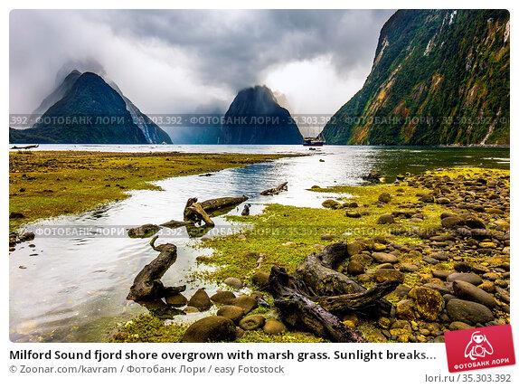 Milford Sound fjord shore overgrown with marsh grass. Sunlight breaks... Стоковое фото, фотограф Zoonar.com/kavram / easy Fotostock / Фотобанк Лори