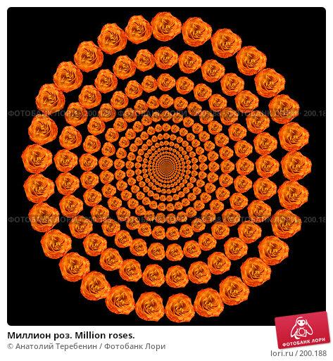 Купить «Миллион роз. Million roses.», иллюстрация № 200188 (c) Анатолий Теребенин / Фотобанк Лори