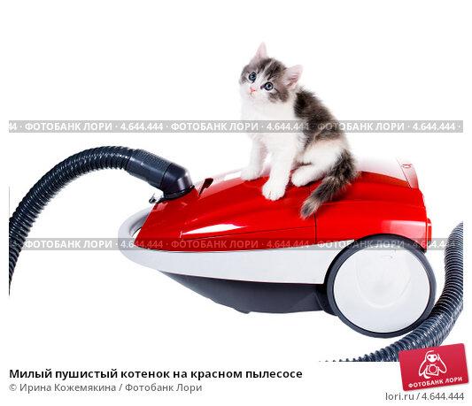 Купить «Милый пушистый котенок на красном пылесосе», фото № 4644444, снято 15 мая 2013 г. (c) Ирина Кожемякина / Фотобанк Лори
