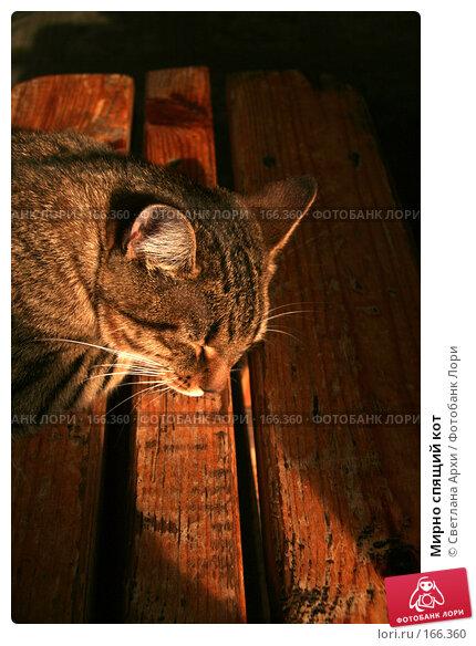 Мирно спящий кот, фото № 166360, снято 7 октября 2006 г. (c) Светлана Архи / Фотобанк Лори
